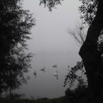 Nebel an der Werra