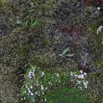 Vegetation am Öxipass