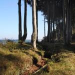Waldweg nach Heiligendamm