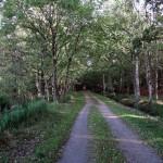 durch den Wald nach Dierhagen