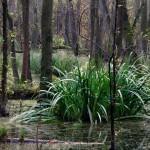 Feuchtgebiet hinter den Duenen