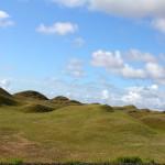 Grassamen gegen Sandstürme