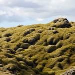 von Moos überwachsene Lavawüste