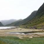 Fjord mit Schafherde