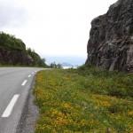 Blütenzauber am Rande der E10