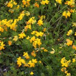 Blütenzauber aus der Nähe