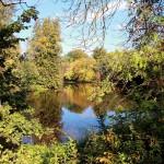 Teich im Gruenen