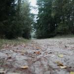 Waldweg nach Bleckede