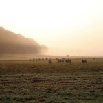 am Weser-Harz-Heide-Radweg