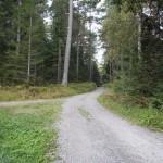 Waldweg zum Fernpass