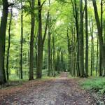 Waldweg mit Kopfsteinpflaster