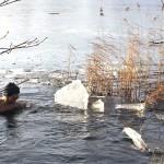 Eisbaden im Lankower See zoom