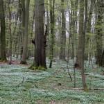 MOF, Wald