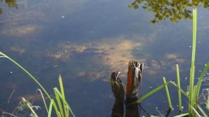 klares Wasser und reichlich Fische