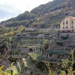 Amalfiküste, Weinanbau