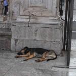am Piazza Cattedrale