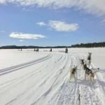 die Gespanne fahren über den See  (Foto Mario R.)